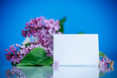 Blooming lilac Royalty Free Stock Photos