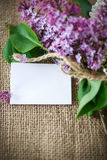 Blooming lilac Royalty Free Stock Image