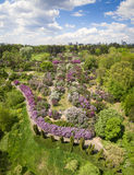 Blooming lilac in Botanic garden. Aerial view. Royalty Free Stock Photo