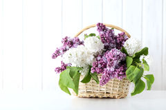 Blooming lilac flowers. In the basket on wall paneling background Royalty Free Stock Photo