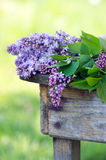 Blooming Lilac flowers Stock Image
