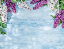 Blooming lilac flowers on the old wood. Royalty Free Stock Photo