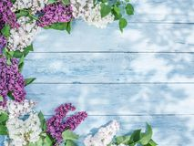 Blooming lilac flowers on the old wood. Stock Photos