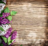 Blooming lilac flowers on the old wood. Royalty Free Stock Images