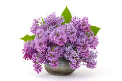 Blooming lilac flowers Royalty Free Stock Photography