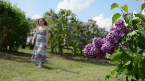 Blooming lilac tree branch move in wind and blurred woman stock video footage