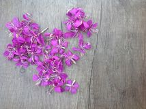 Blooming lilac willow herb Ivan tea on a wooden surface. As background royalty free stock image