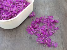 Blooming lilac willow herb Ivan tea on a wooden surface. As background royalty free stock photos