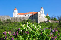 Blooming lilacs against the backdrop of Bratislava Castle Stock Photography