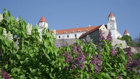 Blooming lilacs against  backdrop of a medieval castle in Bratislava stock video footage
