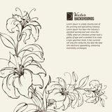 Blooming lilies vector illustration