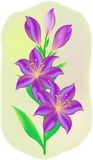 Blooming lily. Bright purple lilies,  illustration Royalty Free Stock Photos