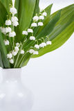 Blooming Lily of the valley Stock Photos