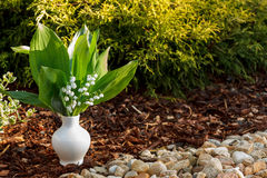 Blooming Lily of the valley in white vase outdoor Royalty Free Stock Photos