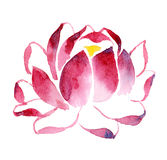 Blooming Lotus. Handmade watercolour illustration of blooming Lotus Royalty Free Stock Photos