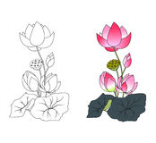Blooming lotus, coloring. Vector illustration Royalty Free Stock Photography
