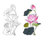 Blooming lotus, coloring Royalty Free Stock Images
