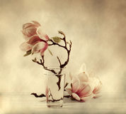 Blooming magnolia Royalty Free Stock Image