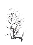 Blooming magnolia tree Japanese style original sumi-e ink painting. Royalty Free Stock Image