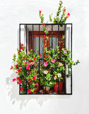 Blooming mallows decorating the window of a white house. Frigiliana, Andalusia, Spain Royalty Free Stock Photo