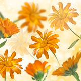 Blooming marigold flower Stock Images