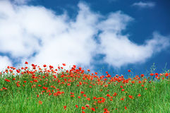 Blooming meadow against sky Stock Photography