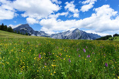 Blooming meadow flowers in spring time with blue sky and cumulus clouds in the Austrian Alps Stock Photography