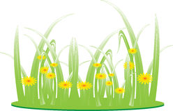 Blooming meadow grass, green grass Royalty Free Stock Photos