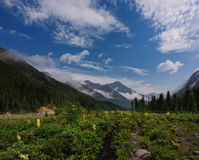 Blooming meadow in a mountain valley Royalty Free Stock Photos