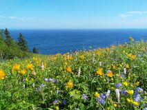 Blooming meadow off the coast of the Pacific ocean royalty free stock photography