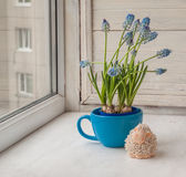 Blooming muscari in blue cup and  lamb on the window Stock Photography