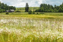 Blooming natural meadow with old country house Royalty Free Stock Image