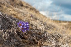 Blooming north desert royalty free stock images