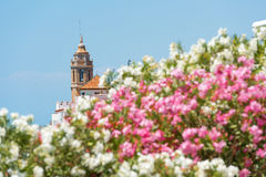 Blooming Oleander against the background of the church of Sant Bartomeu and Santa Tecla in Sitges, Barcelona, Catalunya, Spain. Royalty Free Stock Image