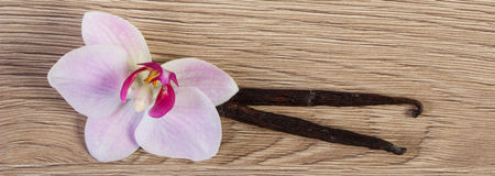 Blooming orchid and fragrant vanilla sticks Royalty Free Stock Images