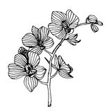 Blooming orchid phalaenopsis garland branch  illustration Stock Photography