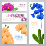 Blooming Orchids Realistic banners Set Royalty Free Stock Images