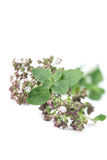 Blooming oregano Stock Photography