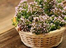 Blooming oregano royalty free stock photos