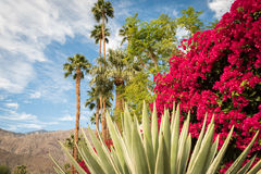 Blooming Palm Springs landscape Royalty Free Stock Photos