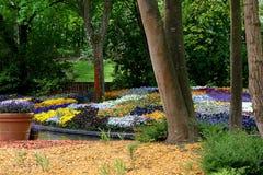 Blooming pansies pansy flower flowers. Royalty Free Stock Photo