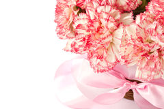 Blooming pink carnation Royalty Free Stock Photos