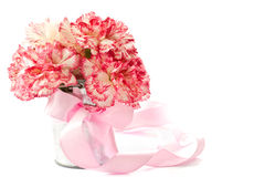 Blooming pink carnation Stock Photo