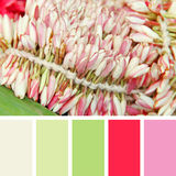 Blooming pink flowers.  color palette swatches Royalty Free Stock Photo