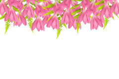 Blooming pink flowers frame on white background Stock Photos