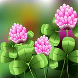 Blooming pink flowers on green field, clover meadow. Illustration Stock Photos