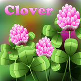 Blooming pink flowers on green field, clover meadow. Vector. Illustration Stock Image