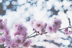 Blooming pink flowers on soft spring background Stock Image