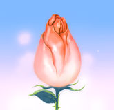 Blooming pink rose bud sky background Stock Image