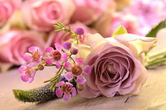 Blooming pink roses Royalty Free Stock Photography